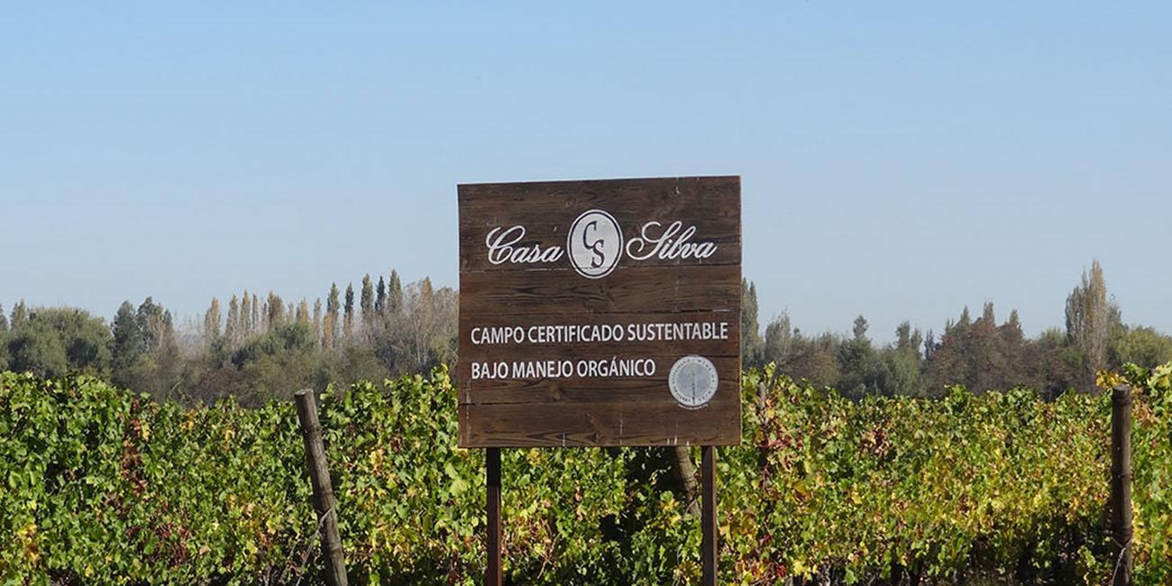 Casa Silva Organic Winery