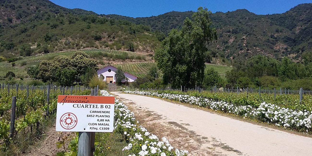 Francois Lurton Winery
