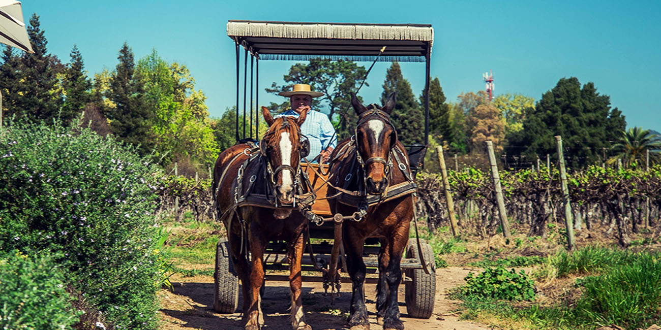Laura Hartwig Winery Horse and Carriage