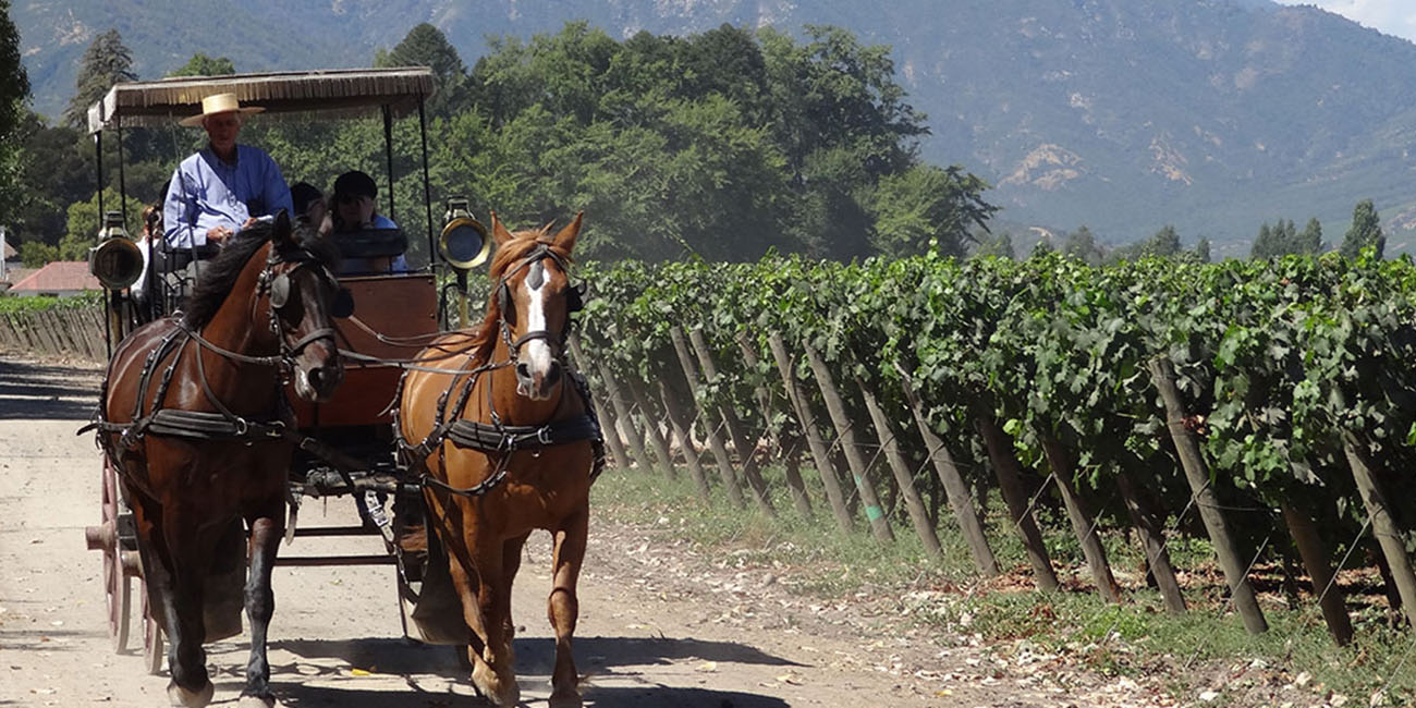 Viu Manent Winery Carriage rides