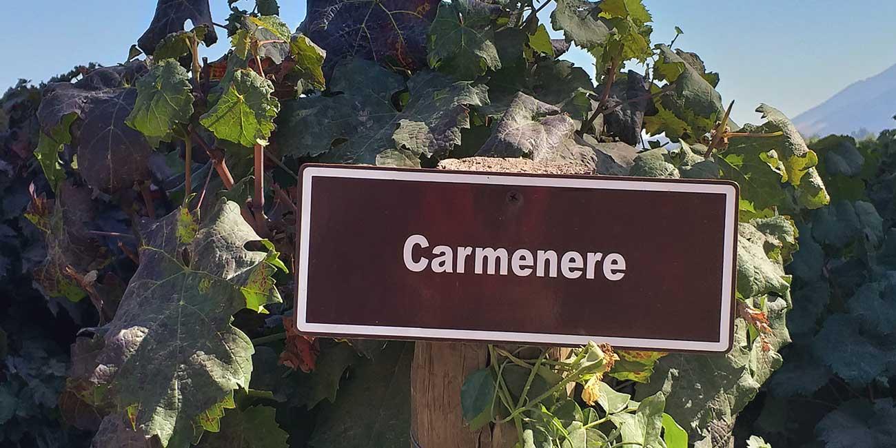 Carmenere Sign