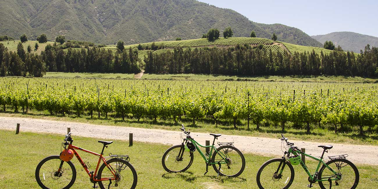 Biking Las Ninas Winery